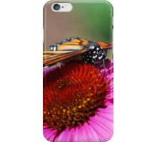 Monarch on a Coneflower iPhone Case/Skin