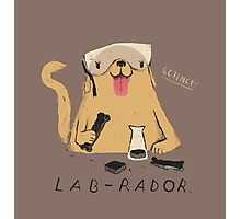 lab-rador Photographic Print