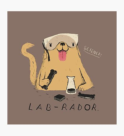 lab-rador Photographic Print