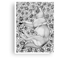 Dingo Dreaming Canvas Print