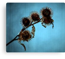 Burdock Canvas Print