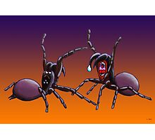 Spider Fight Photographic Print