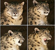 Snow Leopard ~ collage by roger smith