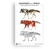 Anatomy of a Wolf Canvas Print