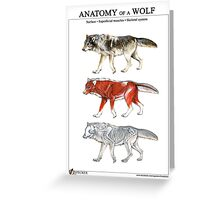 Anatomy of a Wolf Greeting Card