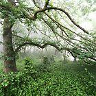 Misty Tree by Geoff Smith