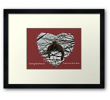 Kissing Red Pandas Framed Print