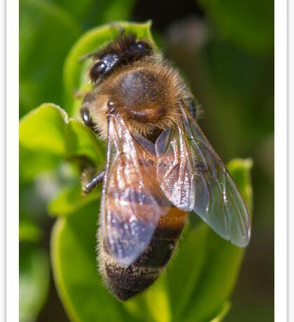 bee on flowers Sticker