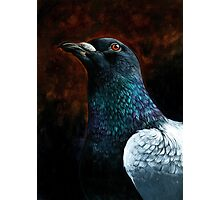 Humble Pigeon Photographic Print