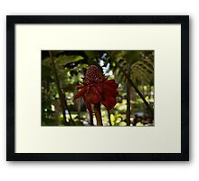 Glossy Jewel in the Jungle - Red Torch Ginger Lily Framed Print