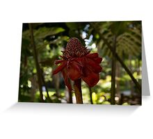 Glossy Jewel in the Jungle - Red Torch Ginger Lily Greeting Card