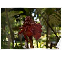 Glossy Jewel in the Jungle - Red Torch Ginger Lily Poster