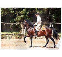 The Portuguese School of Equestrian Art Poster