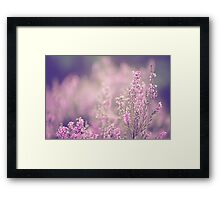 Dreamy Pink Heather Framed Print