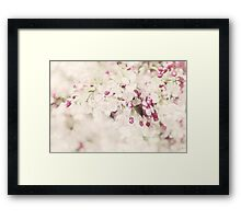 Dreaming of Springtime Blossom Framed Print