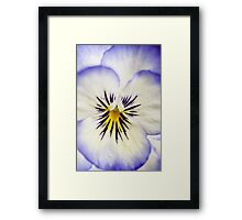 Pretty Pansy Close Up Framed Print