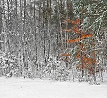 The Beech Tree in Snow by Eileen McVey