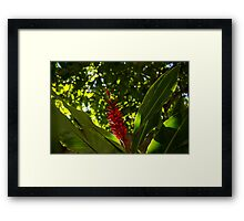 Bold Jewel in the Jungle - Red Ginger in Hawaii Framed Print