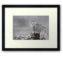 As the night fades into day Framed Print