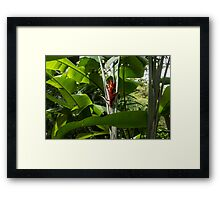 Red Ginger Flower, Framed in Lush Jungle Green Framed Print