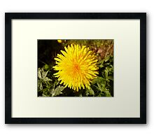 PURE YELLOW Framed Print