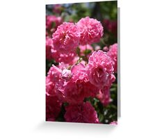 Wild Roses With Garden Background Greeting Card