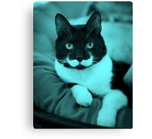Cat Mustache Canvas Print