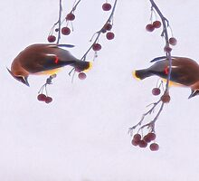 Waxwing Duo by Kathy Weaver