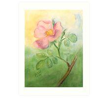 Wild Rose - Heckenrose Art Print