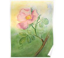 Wild Rose - Heckenrose Poster
