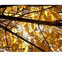 Autumn II Photographic Print