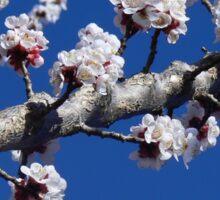 Apricot Flower Sticker