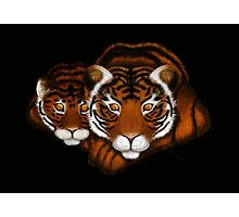 Mother Tiger and Cub  Photographic Print