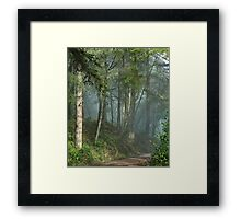 Cowell trail in the fog Framed Print