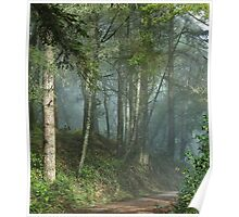 Cowell trail in the fog Poster
