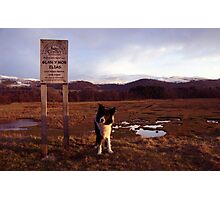 Indy at the Glan Y Mor Elias Photographic Print