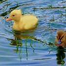 Baby Ducklings by Carla Jensen