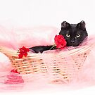 The Bachelor Cat by AndreaBorden