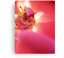 Pink And Red Rose Canvas Print