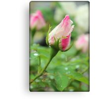 Rose Bud After a Rain Shower Canvas Print