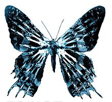 Fringe-butterfly Photographic Print