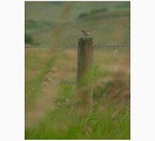 Sparrow on Fence Post Unisex T-Shirt