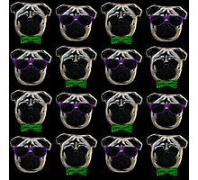 """Cool Pugs"" green/purple Photographic Print"
