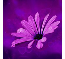 Purple Delight, #purple, #flower, #nature, #abstract, #redbubble Photographic Print
