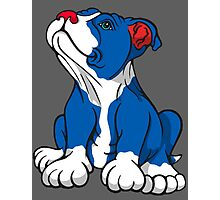 American Pit Bull Puppy  Photographic Print
