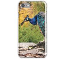 Peacock by RI Arts iPhone Case/Skin