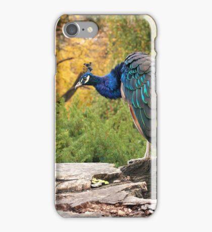 Peacock by RI Arts iPhone Case/Skin