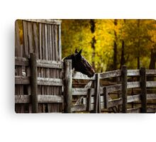 One Horse Waiting Canvas Print