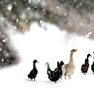 Feathered Friends on a Snowy Day by Betsy  Seeton