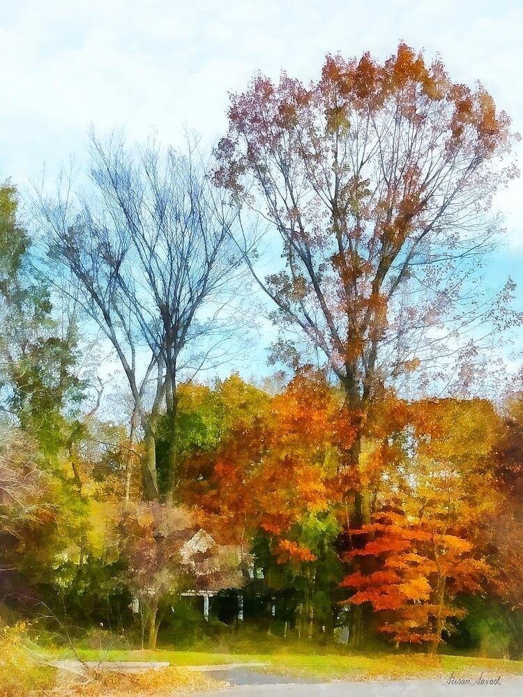 Tall Autumn Trees by Susan Savad
